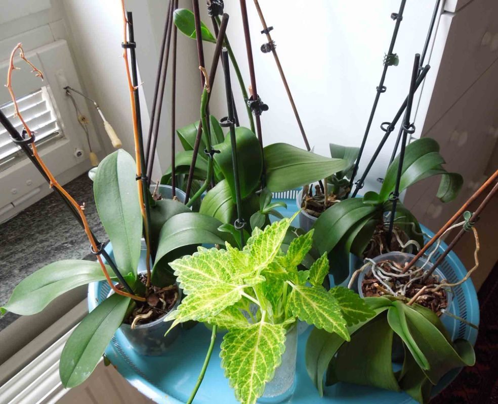 Orkidéer + palettblad